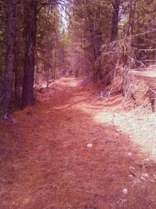 gold-trail